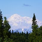 Denali by gcampbell
