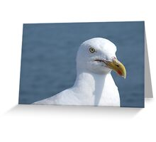 A Fine Feathered Friend Greeting Card
