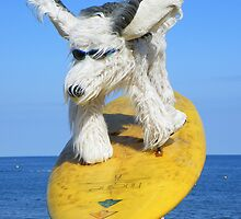 Devon: Cool Dude Dog at Teignmouth by Rob Parsons