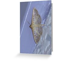 Profile of a Mother of Pearl Moth Greeting Card