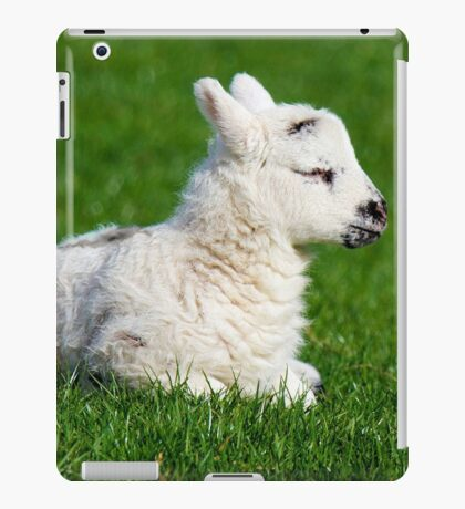 A Sleepy Newborn Lamb In A Field iPad Case/Skin