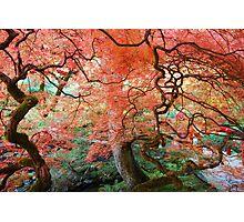 Autumn at Butchart Gardens Photographic Print