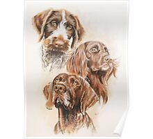 German Pointer Poster