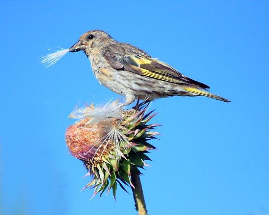 Organic Birdseed by noffi