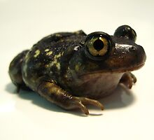 Super Spadefoot Toad