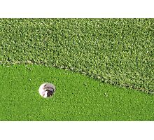 On the Green Photographic Print