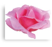 Watercolor pink rose Canvas Print