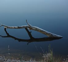 Floating by Jodi Franzke