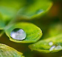 Rain by DoraBirgis