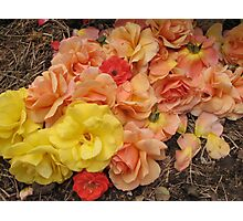A bed of roses Photographic Print