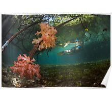 Snorkeling Raja Ampat's Blue Water Mangroves Poster