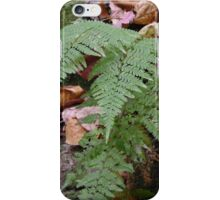 Ferns at Rondel State Park iPhone Case/Skin