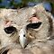 $20 UILE in AFRIKA / $20 OWLS in AFRICA