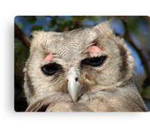 GIANT or Verreaux Eagle Owl -  Bubo lacteus Canvas Print