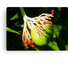 Hula dancing flower pod Canvas Print