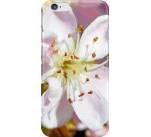 Indian Hawthorn iPhone Case/Skin