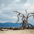 Mesquite Tree Remains - Death Valley by Robert Kelch, M.D.