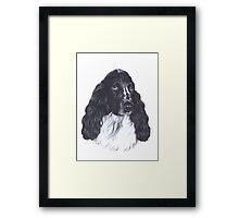 Spaniel Framed Print