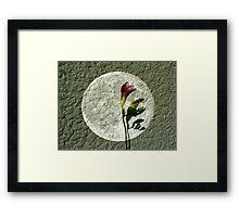 Spotlight on Spring Framed Print