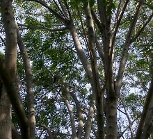 A Study of Light and Shadow: Trees, Foliage and Sky by Ivana Redwine