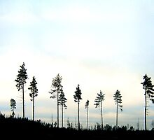 The lonesome trees  by lantica