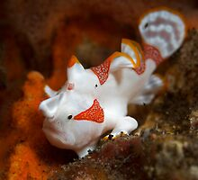 Frogfish posing by Hergen Spalink