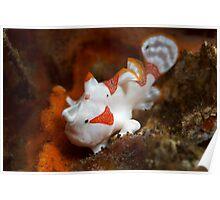 Frogfish posing Poster