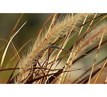 Autumn Rushes Photographic Print