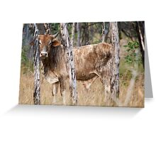 Cape York- Wild Scrub Bull Greeting Card