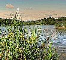 Hatchmere in Cheshire by PhotogeniquE IPA