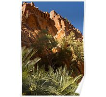 Ormiston Gorge Cycads Poster