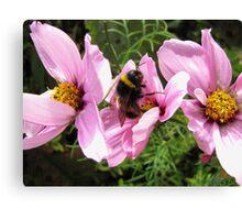 Bee Feast Canvas Print