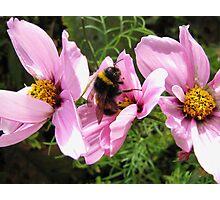 Bee Feast Photographic Print