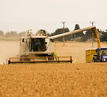 Bringing in the Harvest 2 by Geoff Carpenter