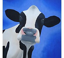Cow blue Photographic Print