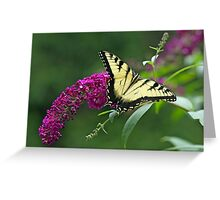 Tiger Swallowtail Butterfly - Papilio glaucus Greeting Card