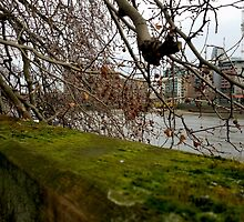 Moss Green River Views by Vanessa  Warren