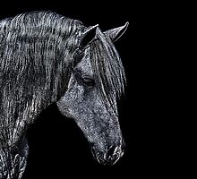 Portrait Of A Horse Fine Art Print by stockfineart