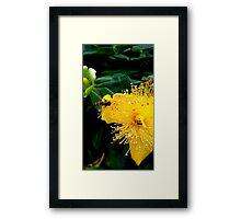 Sunshine Yellow, Bee Black & Orange Framed Print
