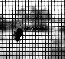 flyscreen by joannemaree