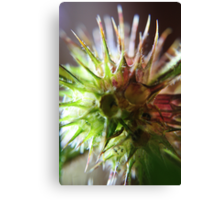It`s Like Sea-Urchin (from wild flowers collection)  Canvas Print