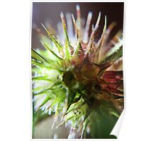 It`s Like Sea-Urchin (from wild flowers collection)  Poster