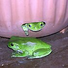 Tree Frogs by Fossdos