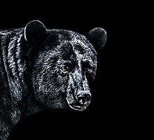 Portrait Of A Bear Fine Art Print by stockfineart