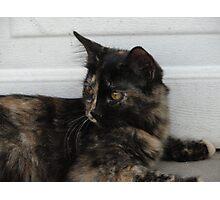 Pretty Kitty Photographic Print