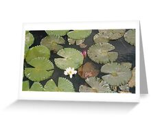 Lotus Leafs Petals and Flowers in Pond Greeting Card