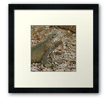 Iguana Bonaire Framed Print