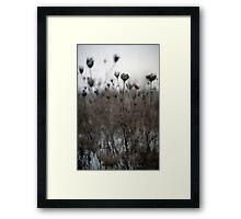 Dried  Flowers Framed Print