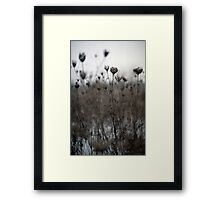Dried  Flowers Framed Print