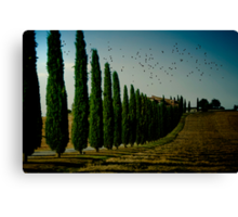 Cypress and Birds Canvas Print